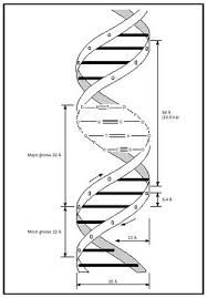 Nucleic Acids Chemistry Encyclopedia Structure Proteins Number