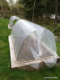 protecting vegetables from cold weather