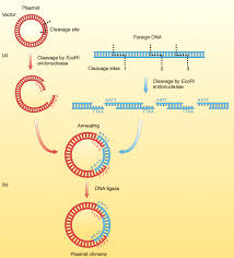 Restriction Enzyme Restriction Enzymes