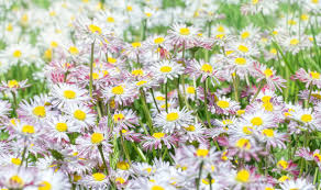 flowers garden. Alan Titchmarsh\u0027s Tips On Growing Wild Flowers   Garden Life \u0026 Style Express.co.uk