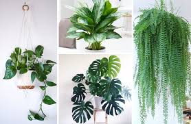 cheap office plants. How To Choose The Right Houseplant: Care For Each Plant + 11 Genius Potting Ideas. \u003e Cheap Office Plants