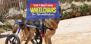 the 7 best dog wheelchairs for rehabilitation