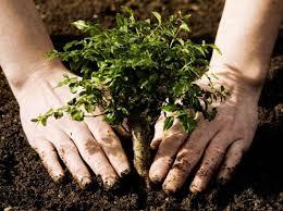 Влияние человека на природу Положительное и отрицательное влияние  Влияние человека на природу Земли