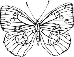 Small Picture The Rose Coloring Page Butterfly Coloring Page Cute Butterfly