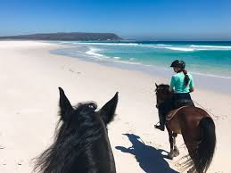 horse riding on noordhoek beach and a true traveller insurance review