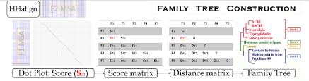 Family Tree Flow Chart Flow Chart Of Family Tree Construction Alignments Of Sequences From