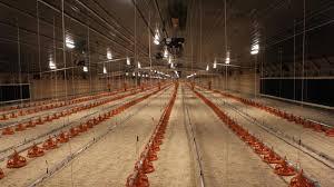 Costco Builds Nebraska Supply Chain For Its 5 Rotisserie Chickens Npr