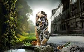 Tiger wallpaper, Robot wallpaper ...
