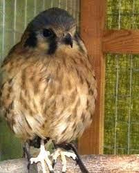 Bird Lady Blog... by Sherrie Steele: Birds of Prey Show