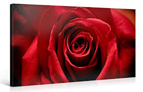 large canvas print wall art stunning red rose 40x20 inch flower canvas picture stretched on red rose canvas wall art with amazon large canvas print wall art stunning red rose 40x20