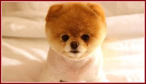 Cute Puppy Pictures Wallpapers (68+ ...