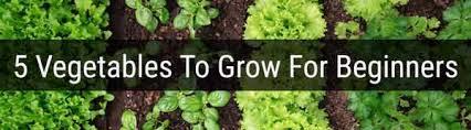 beginner gardening. What To Grow For Begginers Gardening Beginner E