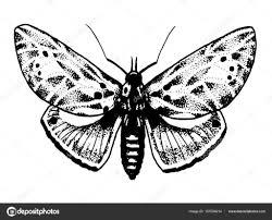 эскизы насекомых насекомые тату эскизы эскиз татуировки бабочек и