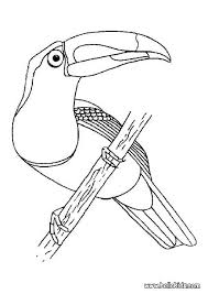 Small Picture Toucan Coloring Page Alric Coloring Pages