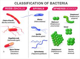 Bacteria Classification Science Class 5ep Bacteria Kingdom