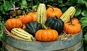 Image result for poem about squash