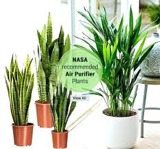 Office Cubicle Best Indoor Office Plants Indoor Office Plants Air Purifier Plants Shop Plants Online Best Indoor Plants 2344wmcleaninfo Best Indoor Office Plants Indoor Office Plants Air Purifier Plants