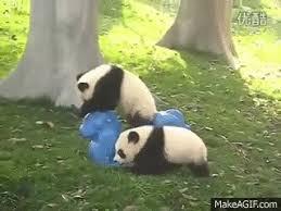 baby panda gif. Beautiful Panda Baby Panda GIF Throughout Gif L