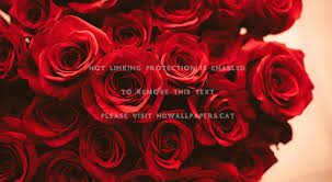 Red Rose Aesthetic Computer Wallpapers ...