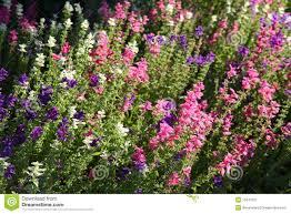 country garden florist. english country garden flowers florist