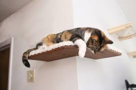 Corner Cat Shelves Gorgeous Fabriccovered Corner Cat Shelf Free US Shipping Cat Shelves