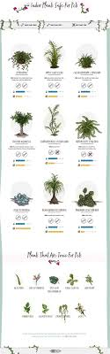 Pet-Friendly Home Decor Tips - Indoor Plants Safe For Pets (And The Toxic