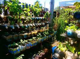 container gardening vegetables. Inspiring Container Gardening Vegetables In The Backyard Decpot Tips For Planting A Vegetable Garden Gardens Cute