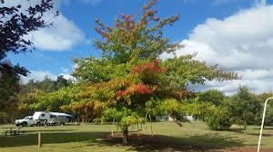 Myrtle Park Recreation Ground - City of Launceston
