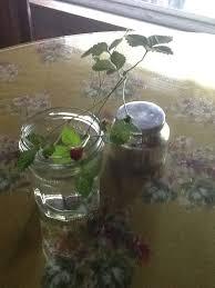 daryl gregg design florist 120 queens dr s little silver nj 07739