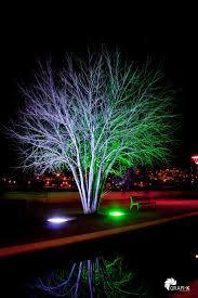 tree lighting ideas. plain tree los contrastes de la iluimnacin led tree lightingoutdoor lightinglighting  ideasexterior decorationslandscape  throughout lighting ideas