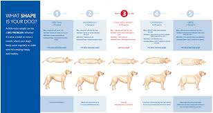 Dog Age Chart By Weight Ideal Dog Weight Chart The Labrador Forum