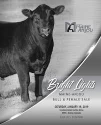 2019 Bright Lights Sale By American Maine Anjou Association