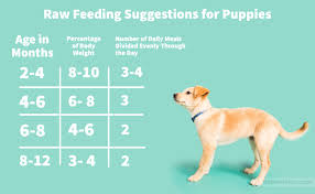 Dog Food Chart By Weight And Age Is A Raw Puppy Food Diet Right For Your Pet Darwins Pet
