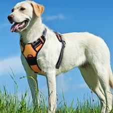 The 5 Best Dog Walking Harness