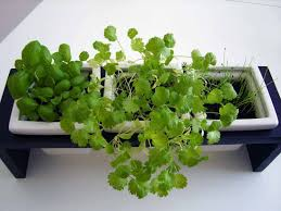 indoor herb garden kit. Indoor Herb Garden Kit