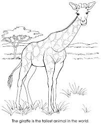 Giraffe Coloring Pages Printable Photostudiousinfo