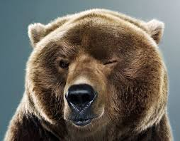 Image result for funny bear pics