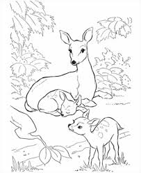 Small Picture Free Printable Deer Coloring Pages For Kids Coloring Coloring Pages