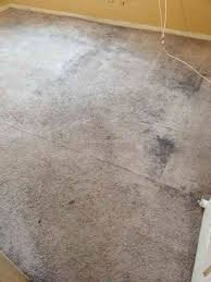 stanley steemer carpet cleaning review from east orange new jersey