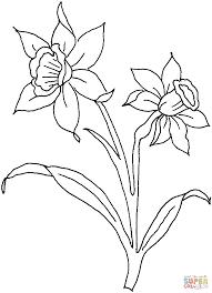Coloriage Deux Fleurs De Jonquille Coloriages Imprimer Gratuits