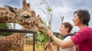 Resultado de imagen de zoo