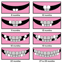 27 Month Milestones Chart Baby Teeth Chart Baby Tooth Chart Baby Development