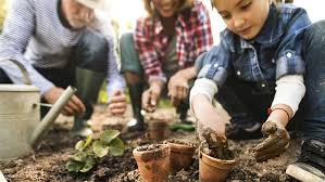 want to start a vegetable garden