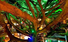Tree House Restaurant And Cafe  Costa RicaTreehouse Monteverde Costa Rica