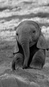 """Résultat de recherche d'images pour """"image de bebe elephant"""""""