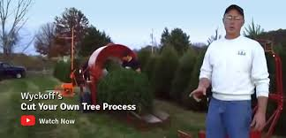 The History Of The Christmas Tree Farm And Where To Find The Christmas Tree Cutting Nj