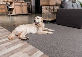 6 dog proof flooring options for home and hound