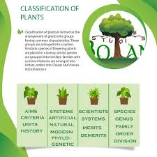 Classification Of Plants Units History Systems Armen