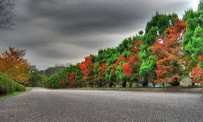 Desktop Nature (73+ background pictures ...