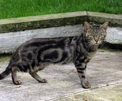 how to keep cats out of the garden. Love Cats Or Hate Cats? How To Keep Out Of The Garden